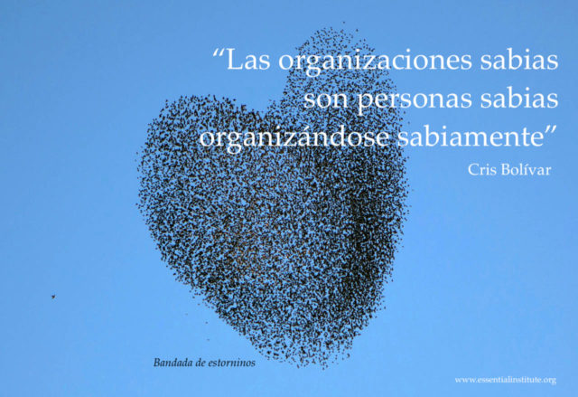 organizaciones sabias by CB